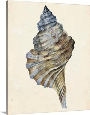 Watercolor Seashell III