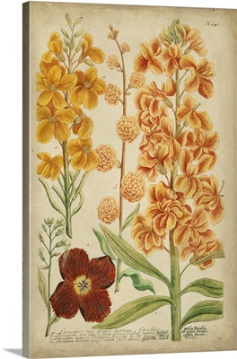 Weinmann Tropical Floral I