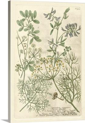 Weinmann's Garden IV