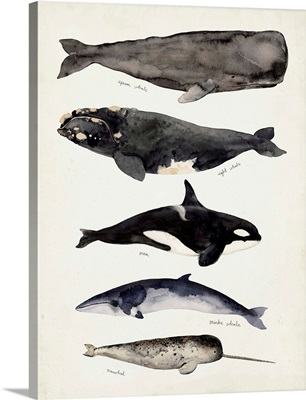 Whale Chart I