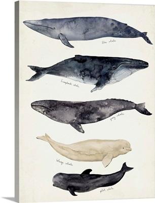 Whale Chart II