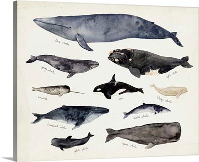 Whale Chart III