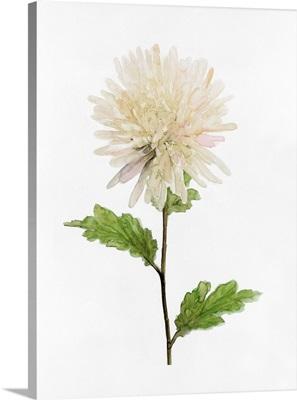 White Blossom IV