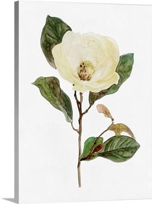 White Blossom VII