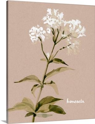 White Bonesets I