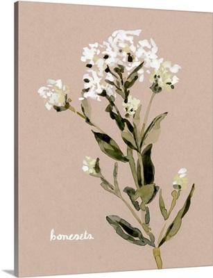 White Bonesets II