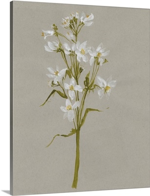 White Field Flowers I