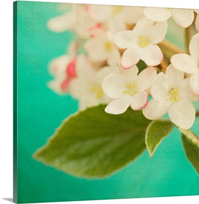 White Flowers IX