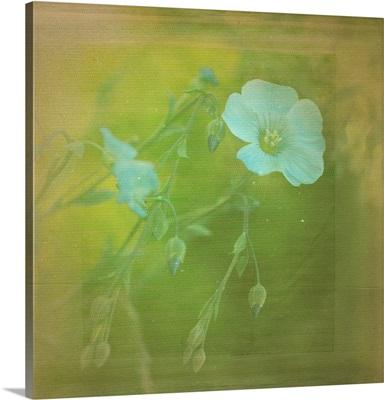 White Flowers VI