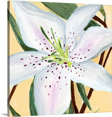 White Lily II