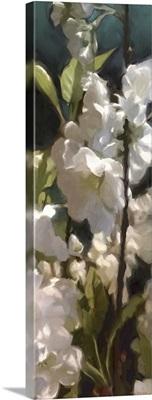 White Roses V