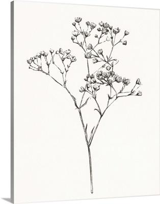 Wild Bloom Sketch I