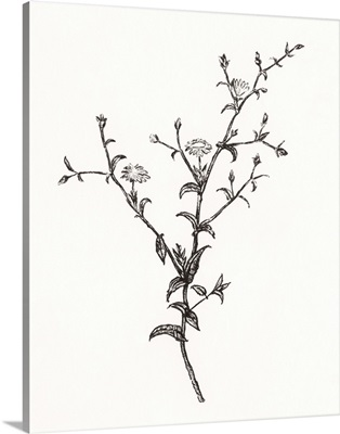 Wild Bloom Sketch II
