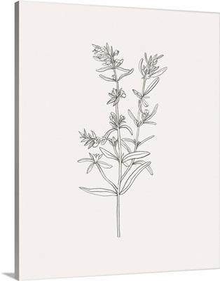 Wild Foliage Sketch I