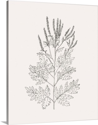 Wild Foliage Sketch II