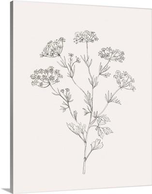 Wild Foliage Sketch III