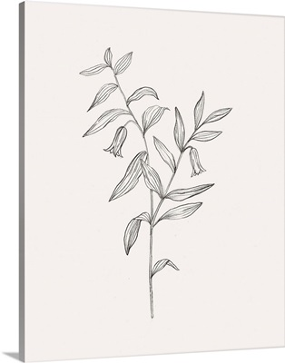 Wild Foliage Sketch IV