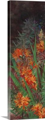 Wild Lily Garden I