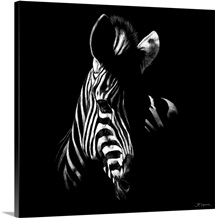 Wildlife Scratchboards V