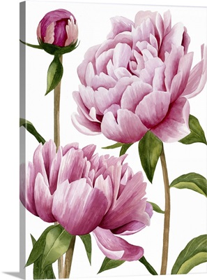 Winsome Peonies I