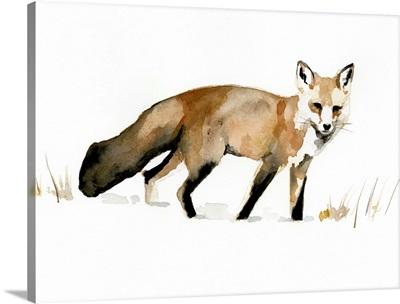 Winter Fox I