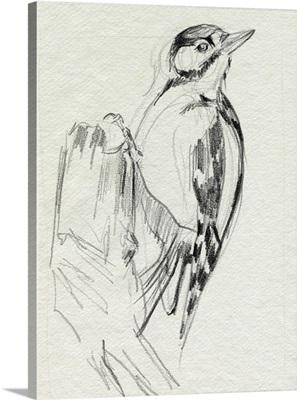 Woodpecker Sketch II
