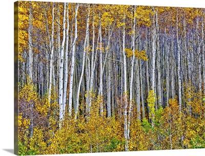 Yellow Woods I