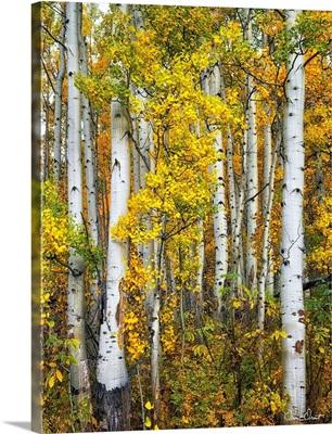 Yellow Woods V
