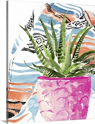 Zebra Succulent I