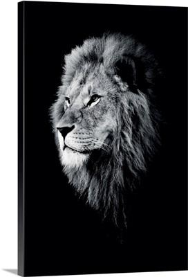 Dark Lion 3