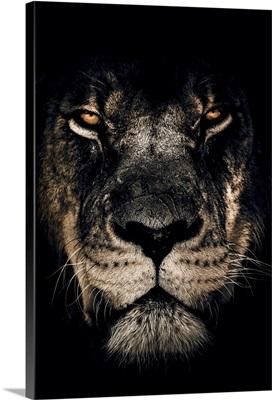 Dark Lion Closeup