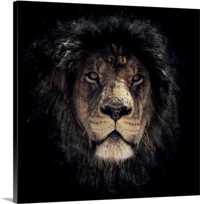 Dark Lion Special Colorized Square