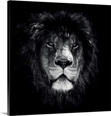 Dark Lion Special Square