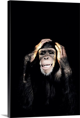 Dark Monkey Hear No Evil