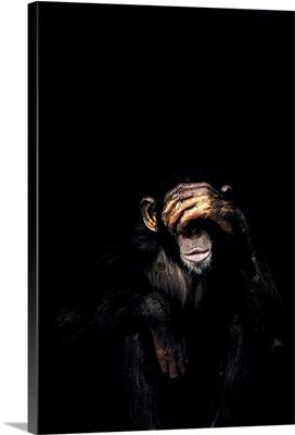 Dark Monkey See No Evil