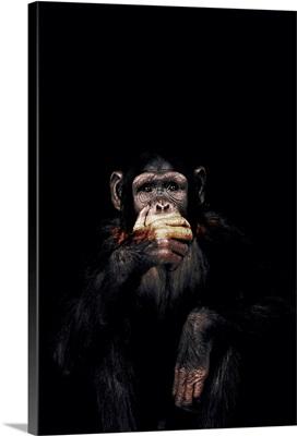 Dark Monkey Speak No Evil