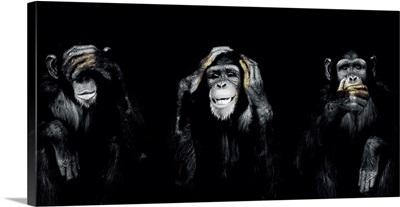 Dark Monkeys Special Panorama