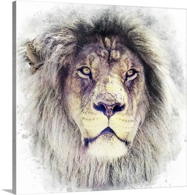 White Lion Special Colorized