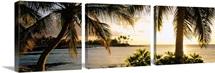 Palm trees on the coast, Kohala Coast, Big Island, Hawaii