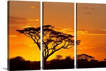 Silhouette of trees in a field, Ngorongoro Conservation Area, Arusha Region, Tanzania