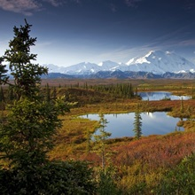 Male hiker near two kettle ponds in the fall tundra in Denali National Park