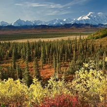 Scenic view of Mt. McKinley and the Alaska Range with taiga and Fall colors