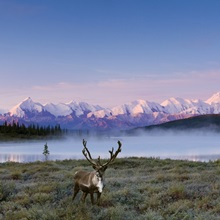 Scenic view of Mt. McKinley and Wonder Lake on a foggy morning