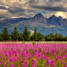Scenic view of Pioneer peak with Fireweed in the foreground, Palmer, Alaska, HDR image