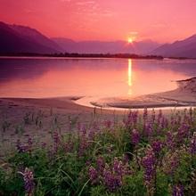 Sunrise Twentymile River & Lupine SC AK summer scenic