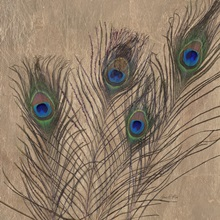 Gilded Peacock Feathers