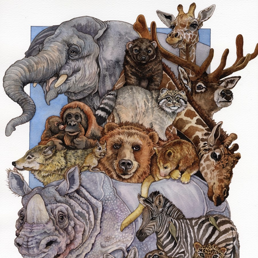 Wild Animal Collage Wall Art Canvas Prints Framed Prints