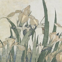 Iris Flowers and Grasshopper, c.1830-31