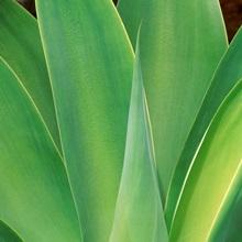 Cactus, southern California