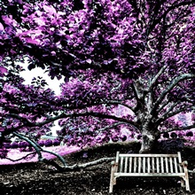 Tree of Knowledge - Infrared Version, Virginia, USA